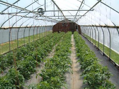 Ledgewood Farm-greenhouse frame, high tunnel, New Hampshire